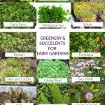 best fairy garden plants