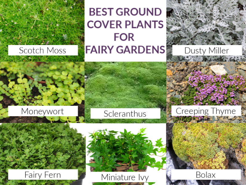 the best ground cover plants for fairy gardens