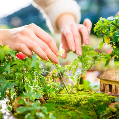The Best Plants for Fairy Gardens