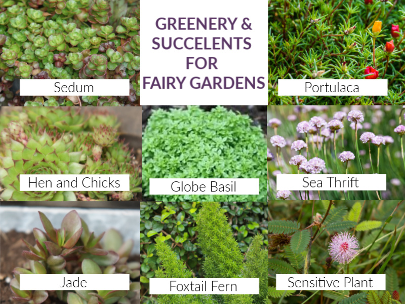 greenery and succulents for fairy gardens