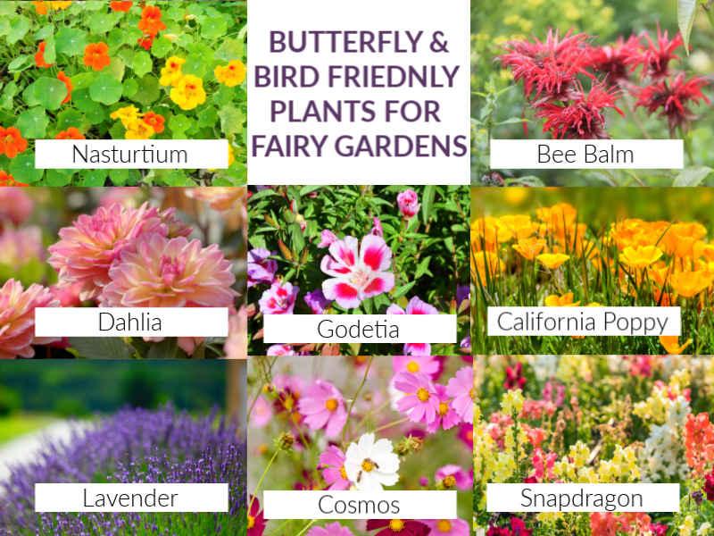 butterfly friendly plants for fairy gardens