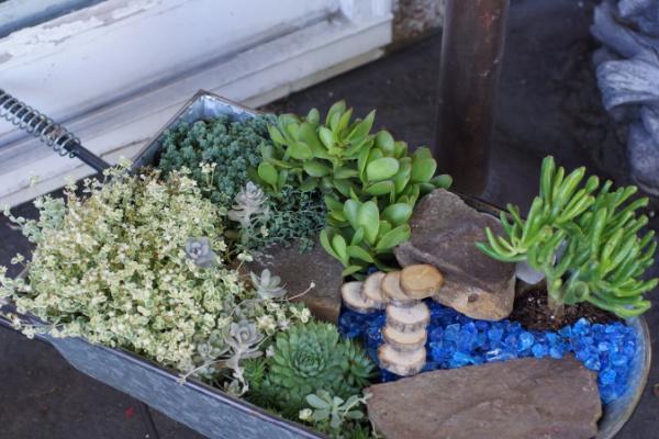 creating a succulent fairy garden