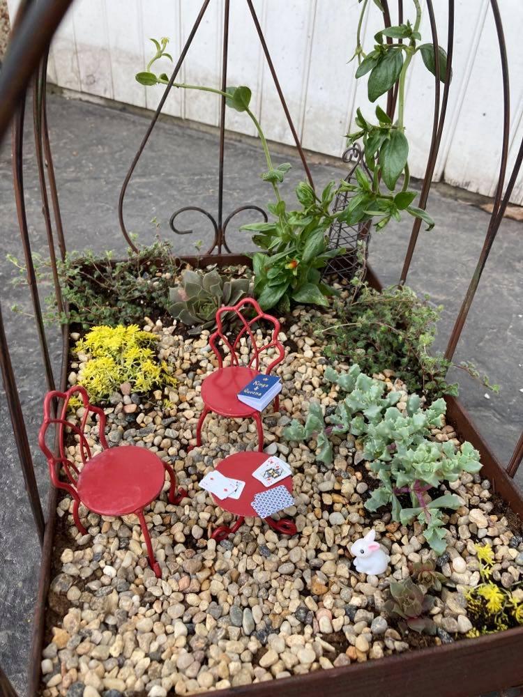DIY fairy garden in a birdcage ALT TEXT TEST