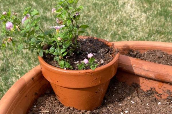 pink flowers in a DIY Broken Pot Fairy garden